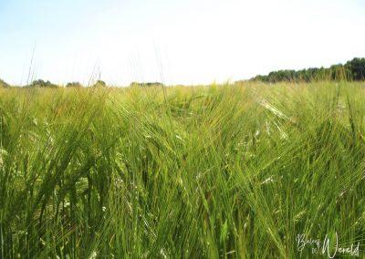 01 juli 2006 - Een zomerse wandeling in Drenthe