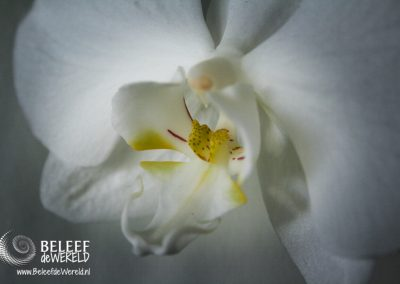 6 september 2007 - Witte orchidee